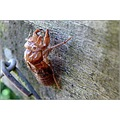 insect skin insectskin nature wildlife