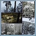 snow white trees collage