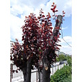 red brown trees