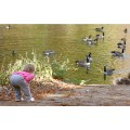 Birds Child Children Water Goose Nature