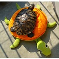 Turtle on favorite pillow