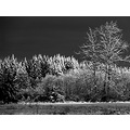 Blackandwhite BW snow port angeles