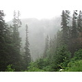 northtoalaska coralprincess alaska skagway whitepass railroad trees fog