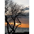 sunset tree ocean