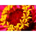 macro closeup flower yellow red