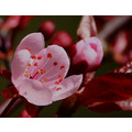 shutterlyspectacularphotography cherryblossom Flowers spring