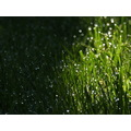 green grass summer dew drop drops morning garden