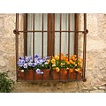 Flowers in a Castilian Window