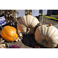 upstate newyork road lafayette apple festival pumpkins