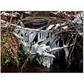 ice snow bamboo creek ozarks