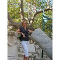 kos greece platan tree hippocrates archeology