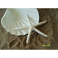 fun beach sand shell starfish