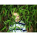 boy portrait bamboo