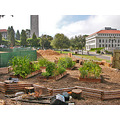 ucbfph garden uc berkeley university victory vegetables herbs buildings