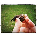 snail small macro slime hand finger green brown outdoors invertibrate