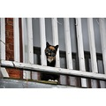 Veranda railings cat