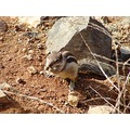 fuerteventura mountains canary islands landscape nature atlantic ocean chipmunk