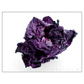 dry flower death purple macro nature beauty