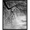 tree naked autumn sky black white