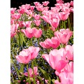 Butchard Gardens in Victoria B.C Canada