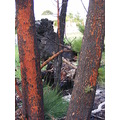 burnt bushland colours regrowth