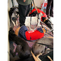 Rescue Greyhounds