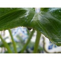 plant plants macro drop drops green leaf