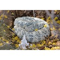 Speckled Rattlesnake.  This is an animals that I've been observing for 2 weeks. Today when I fo...