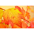autumn leaves mjghajar