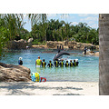 Discovery Cove orlando hotels Hotels near Magic Kingdom orlando