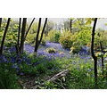 Shot at the woods at Wivenhoe in Essex