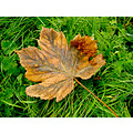 closeup macro leaf plants trees grass nature autumn fall