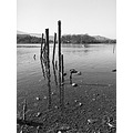 Mamiya Lake Derwent BW film