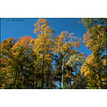 stlouis missouri us usa fall colors trees sky CCP 103010