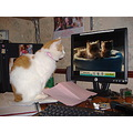 cat computer youtube