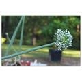 The onions are blooming!  I've never had much success at growing onions.  These are volunteers th...