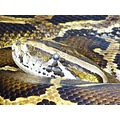 snake anaconda boa giant eye paignton zoo tropical reptiles