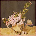 still life blossoms watering can flowers branch pink