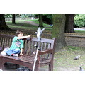 park bench child pigeon