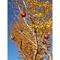 ginkgo yellow ornaments decorations holiday christmas holidayfph