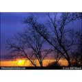 stlouis missouri usa sunset tree limbs sky color red orange 032211