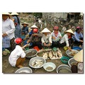 vietnam caugiat market view people seafood vietx caugx markx viewv peopx