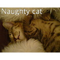 naughty cat cute