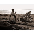 Beach Driftwood photography