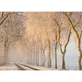 fog sunrise snow trees winter