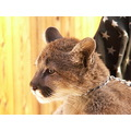 Whats for dinner?