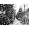 winter snow snowfall nature scenery woods tree snow covered path