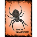 halloweenfriday spider