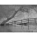 fence river tree duck black white