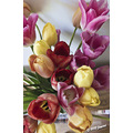 flowers floral bouquet tulips